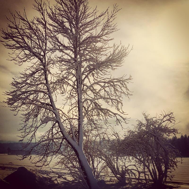 Wintertree images stock