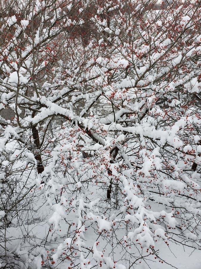 Wintertree imagen de archivo libre de regalías