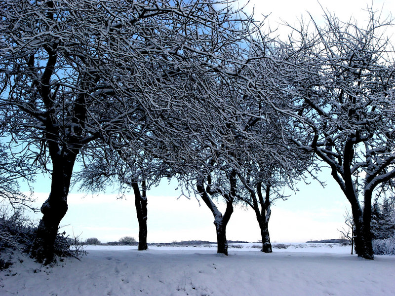 Download Wintertrees stock image. Image of cloud, nature, pears, white - 11203