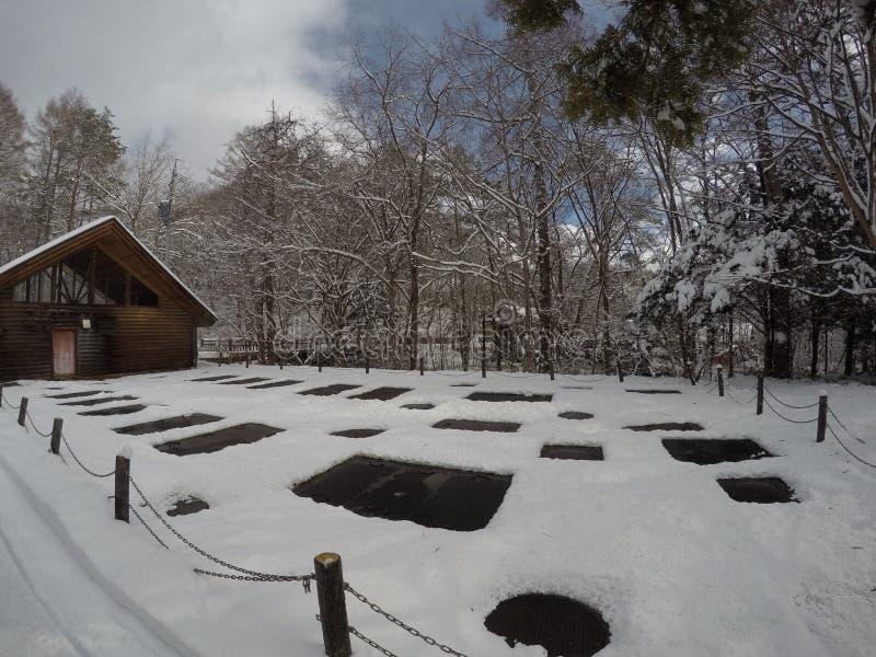 WinterTreesInJapan obraz stock