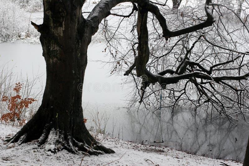 Winterwald stockfotografie