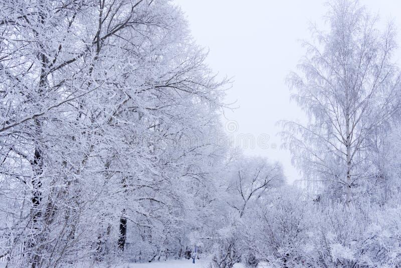 Winterwald in der Parkfichte lizenzfreies stockbild