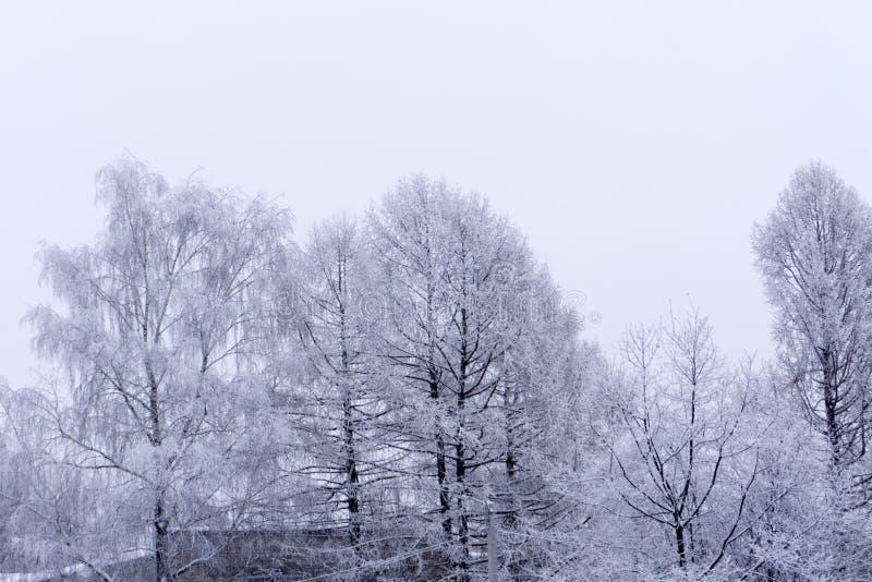 Winterwald in der Parkfichte lizenzfreies stockfoto
