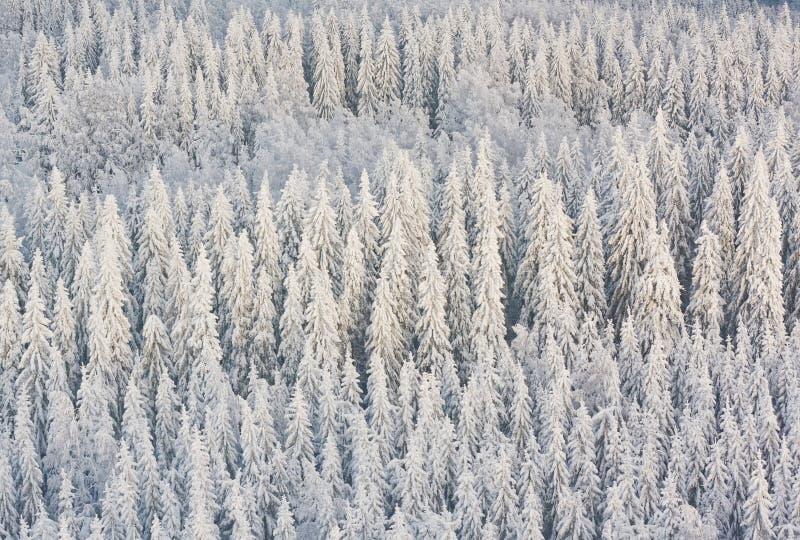 Winterwald in Finnland lizenzfreies stockbild