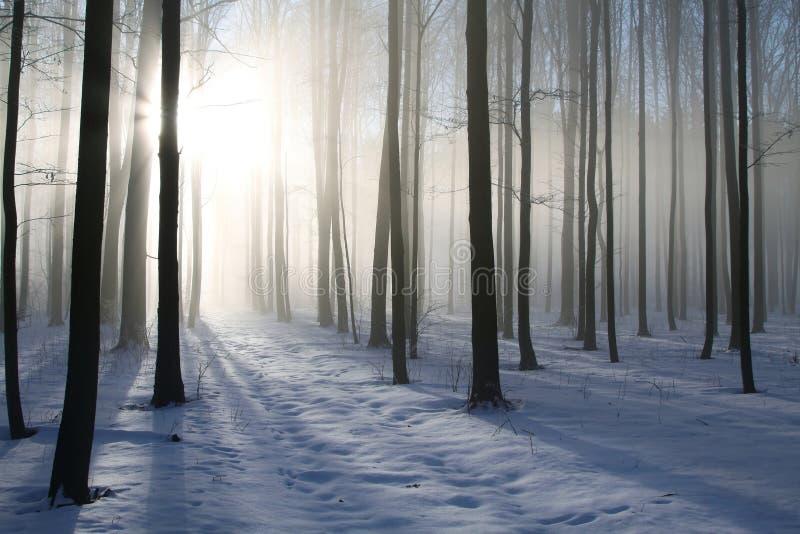 Winterwald im nebeligen Wetter an der Dämmerung stockbild
