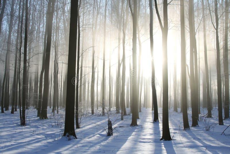 Winterwald im nebeligen Wetter im Sonnenschein stockfotografie