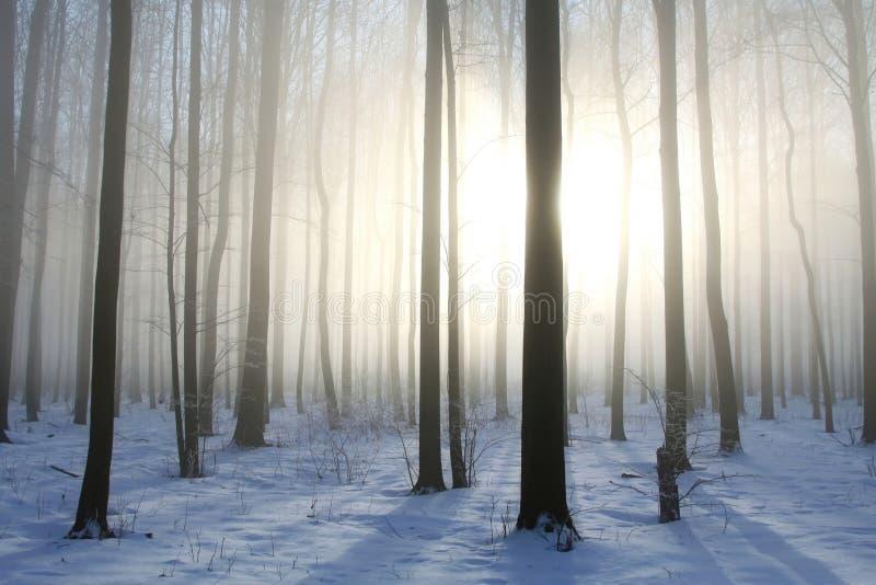Winterwald im nebeligen Wetter im Sonnenschein lizenzfreies stockfoto