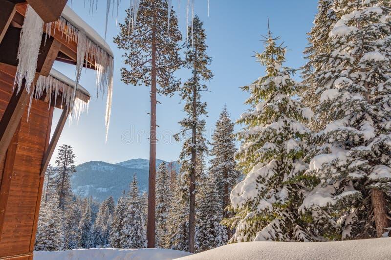 Winterwald im Sequoia-Nationalpark lizenzfreies stockfoto