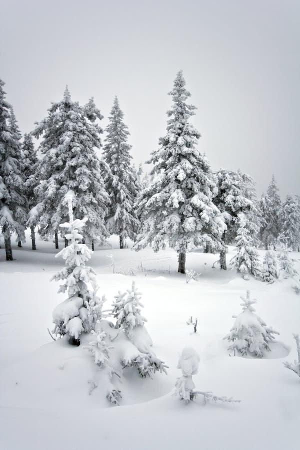 Winterwald im taiga. Nationalpark Taganay.Ural. lizenzfreie stockfotografie