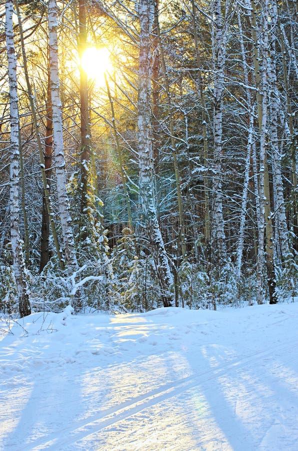 Winterwald mit Sonnenschein lizenzfreies stockbild