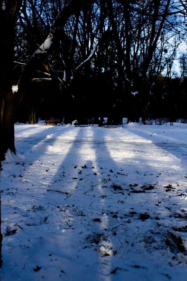 Winterwald, Schatten in den Strahlen der untergehenden Sonne stockbilder