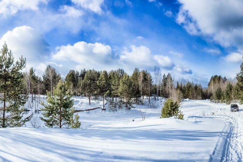 Winterwald, Schnee umfasste Ausdehnungen lizenzfreies stockfoto