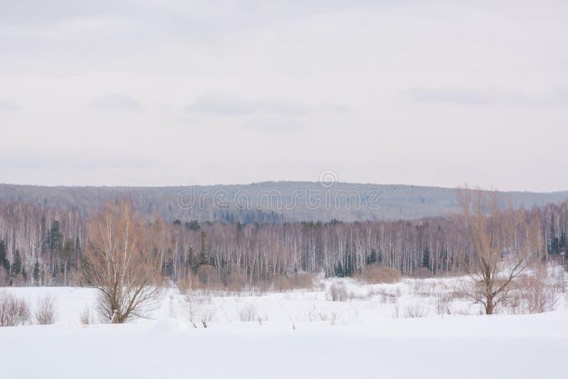 Winterwald, taiga Wald im Winter in Sibirien Taiga-Kiefern im Winter Bäume unter dem Schnee stockbild