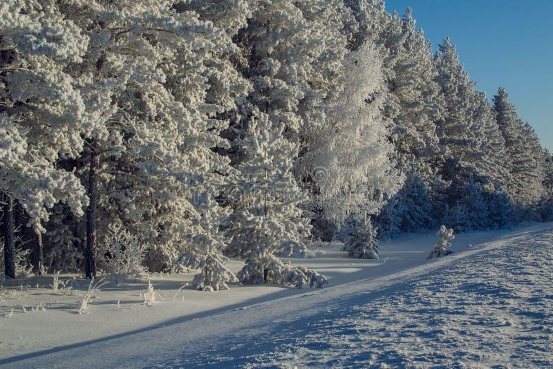 Winterwald und schneebedecktes Feld lizenzfreies stockfoto