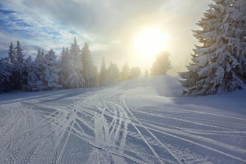 Winterwald und -sonne stockfotos