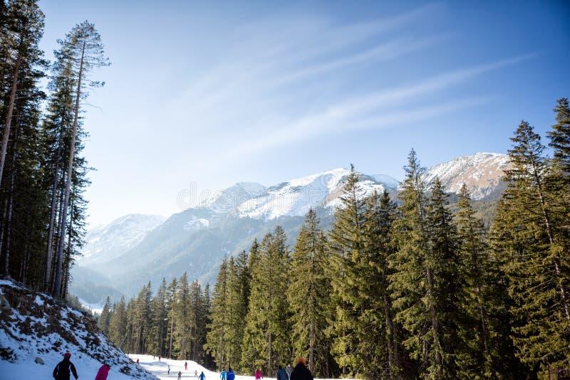 Winterwald von Tannenbäumen lizenzfreie stockbilder