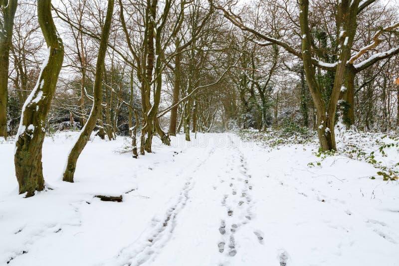Winterwaldlandschaft stockfotos