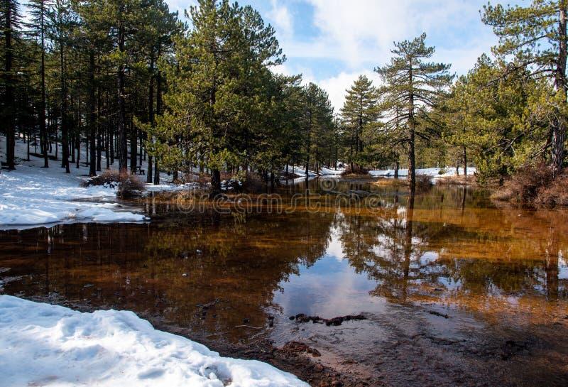 Winterwaldlandschaft mit Berg- und Seeblick lizenzfreie stockfotografie