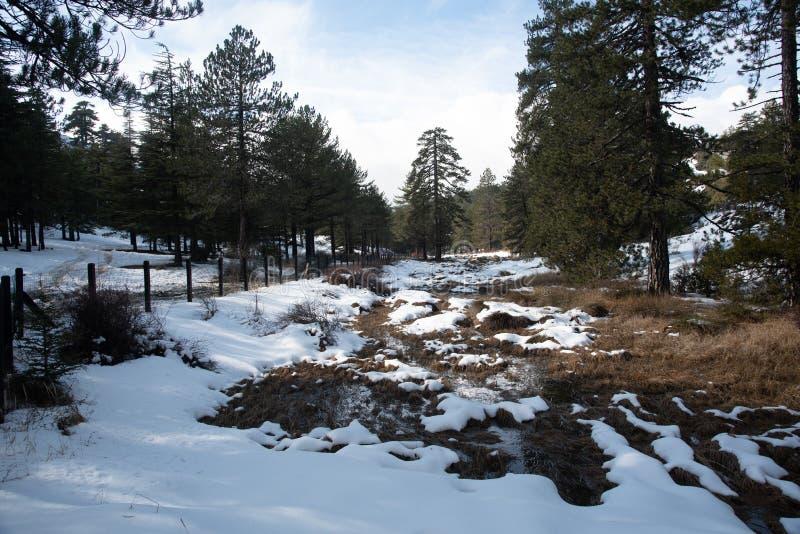 Winterwaldlandschaft mit schneebedeckten Bergen und Kiefern lizenzfreie stockfotos