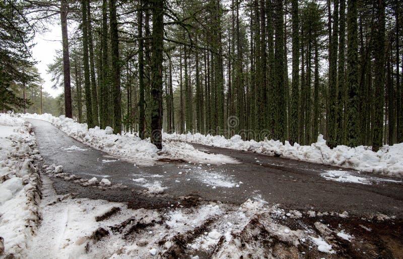 Winterwaldlandschaft mit schneebedeckten Bergen und leer gefrorener Straße stockbilder