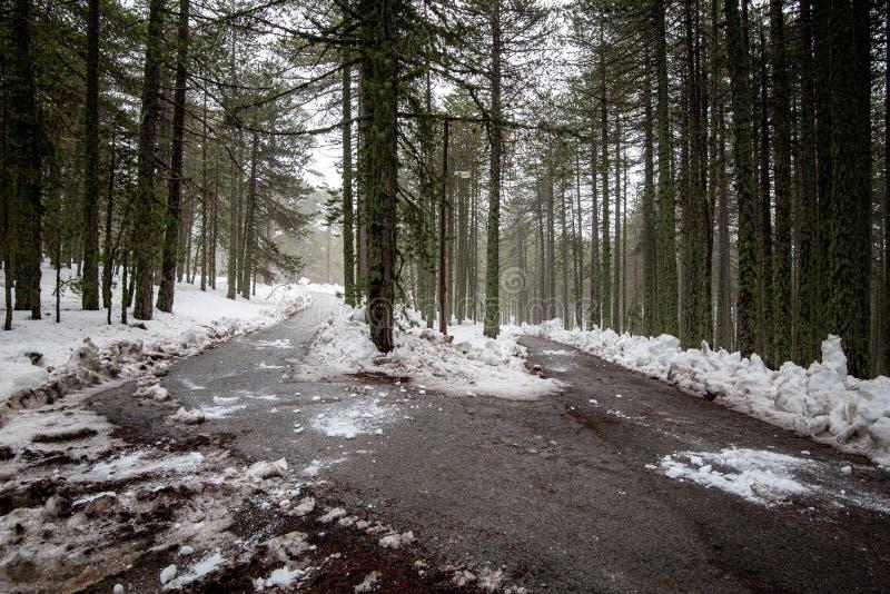 Winterwaldlandschaft mit schneebedeckten Bergen und leer gefrorener Straße lizenzfreie stockbilder
