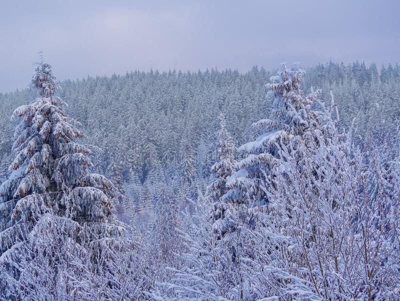 Winterwaldnaturlandschaft mit Schnee bedeckte Bäume Naturwinterhintergrund Beschneidungspfad eingeschlossen lizenzfreie stockbilder