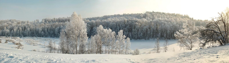 Winterwaldpanorama mit bloßen Bäumen im Hoar stockfoto