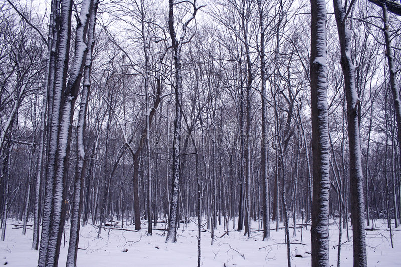 Winterwaldrand stockfotos