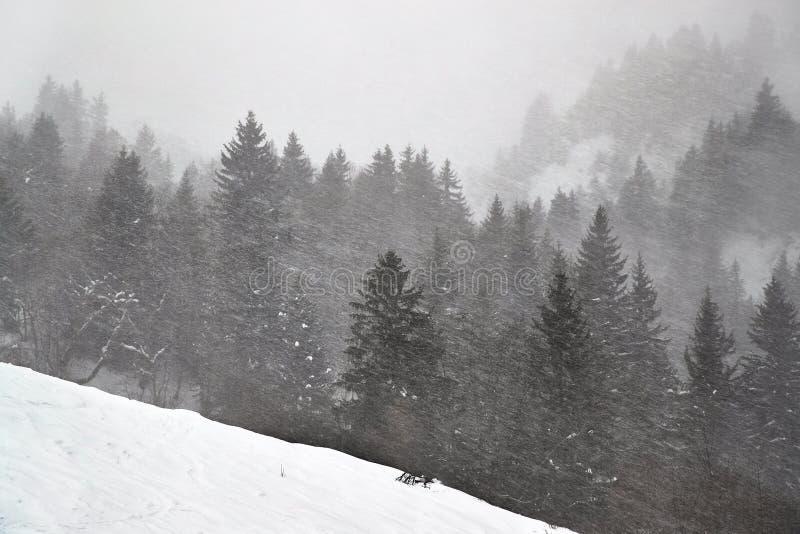 Winterwaldschneesturm und -nebel lizenzfreie stockfotografie