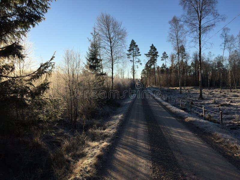 Winterwaldschotterstraße stockfotografie