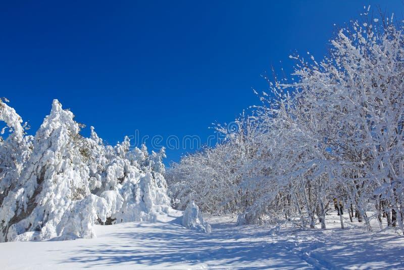 Winterwaldszene lizenzfreie stockfotos