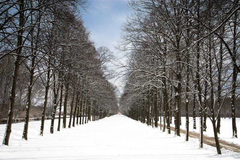 Winterwaldweg stockfotografie