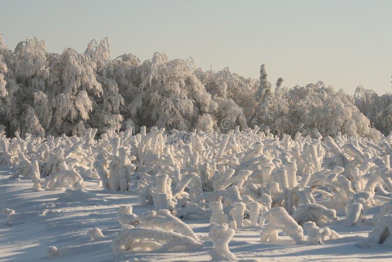 Winterweißferien lizenzfreies stockfoto
