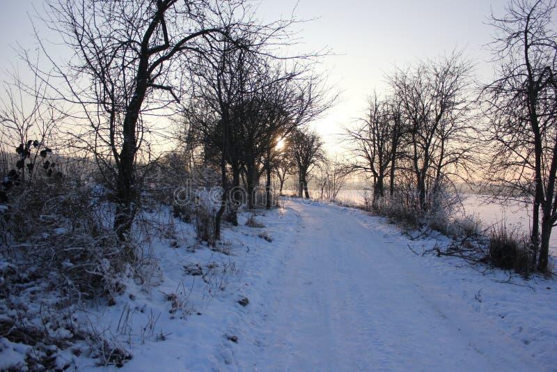 Winterwiese lizenzfreies stockfoto