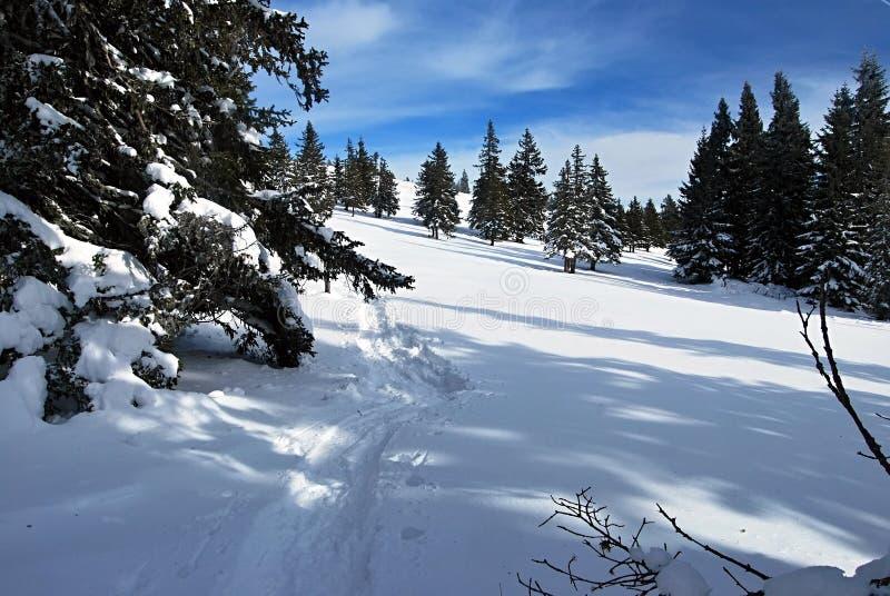 Winterwiese mit Baum nahe Roseggerhaus-Chalet in Steiermark stockfoto