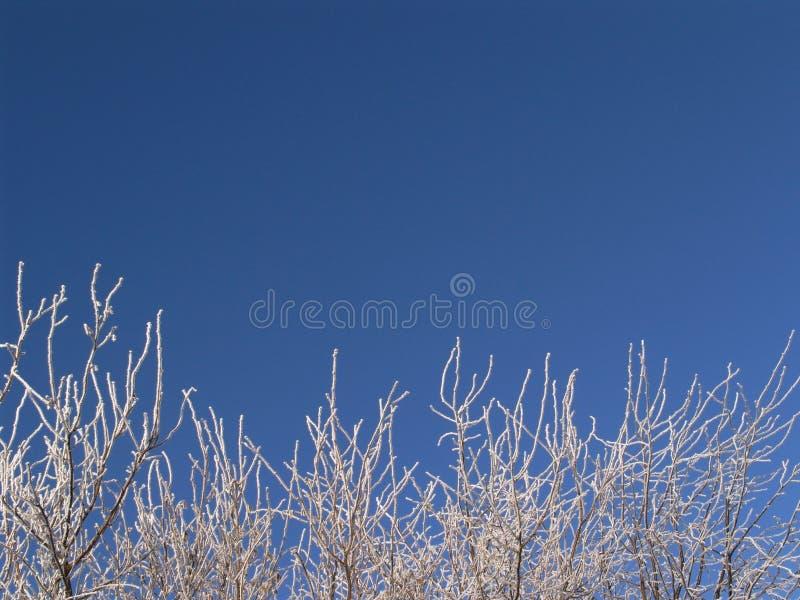 winterwonder 1 royalty free stock images