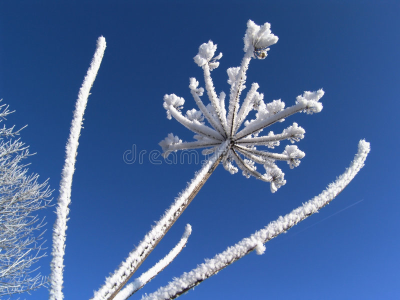 winterwonder 3. stockbild