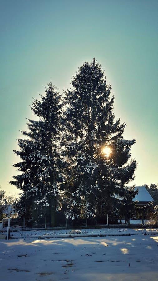Winterwonderland imagenes de archivo