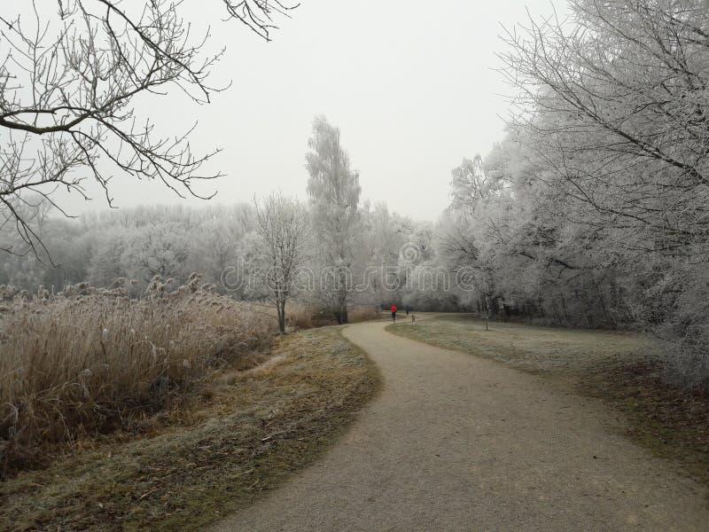 Winterwonderland stockbilder