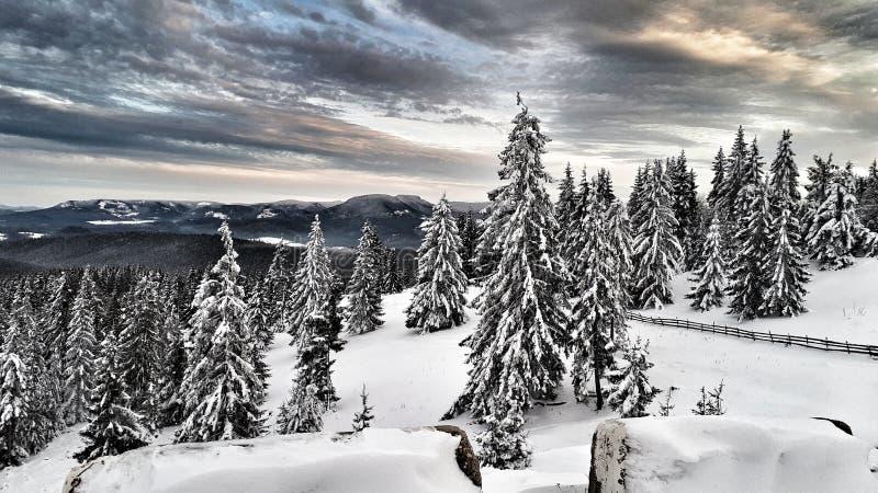 Winterwonderland foto de stock royalty free