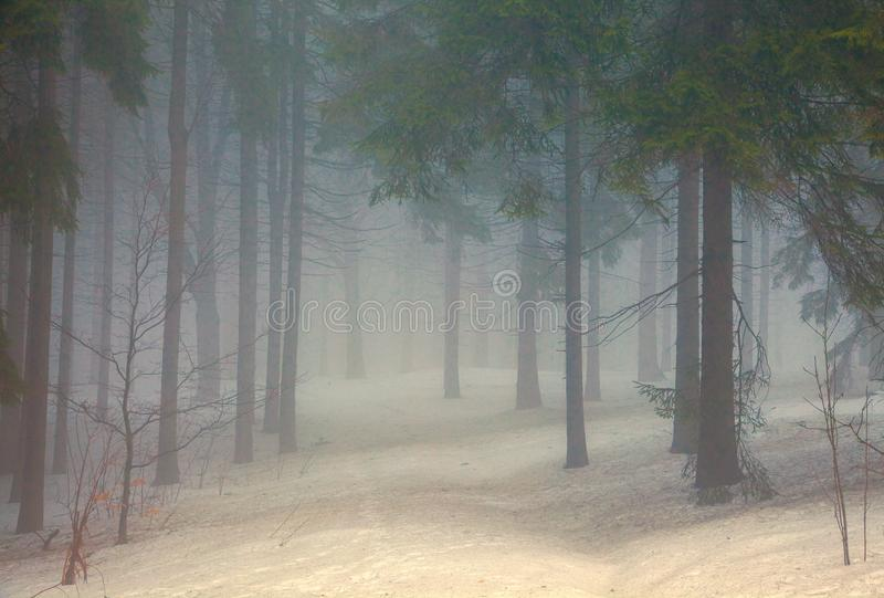 A wintery forest with snow and fog stock image