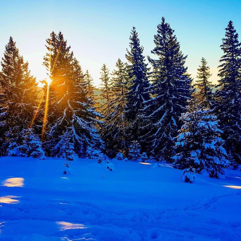 Wintet narciarstwo zdjęcia stock
