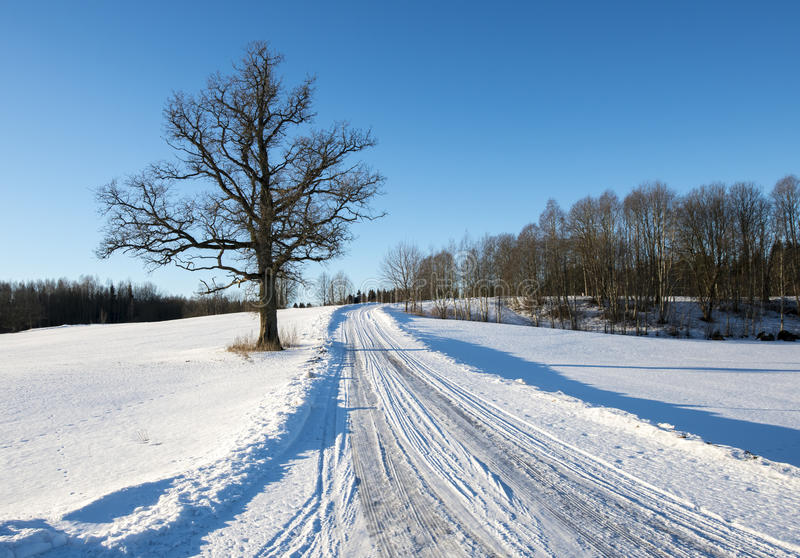 Wintry countryside road in Krimulda, Latvia, Europe royalty free stock photo