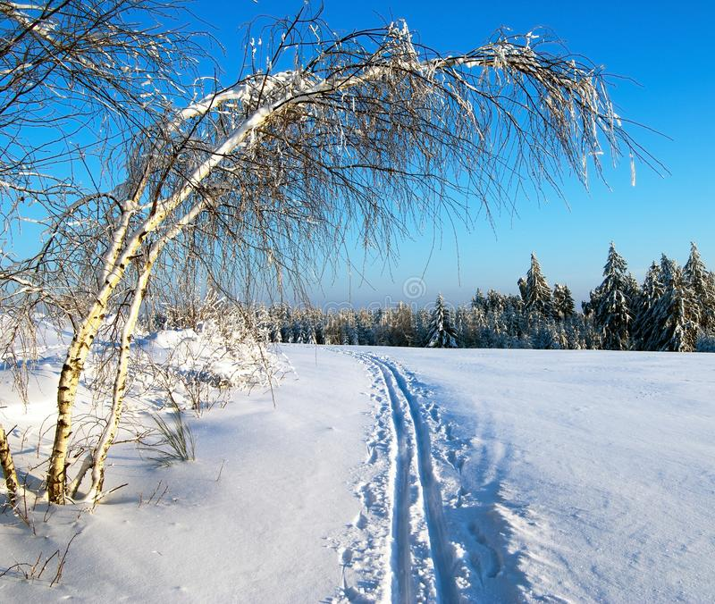 Download Wintry Evening View Cross Country Skiing Way With Stock Image - Image: 27022041
