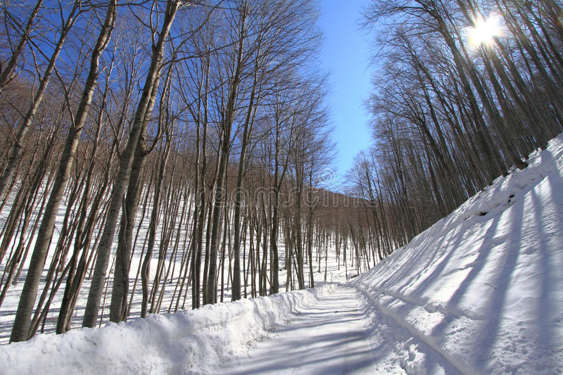 Wintry Forest Stock Photos