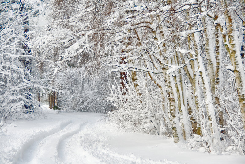 Wintry road through birch forest stock image