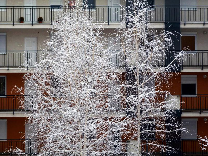 Wintry scene of courtyard with snowy tree. Snowy birch trees in residential multi unit court yard with open inner corridors, railings and entrance doors to flats royalty free stock images