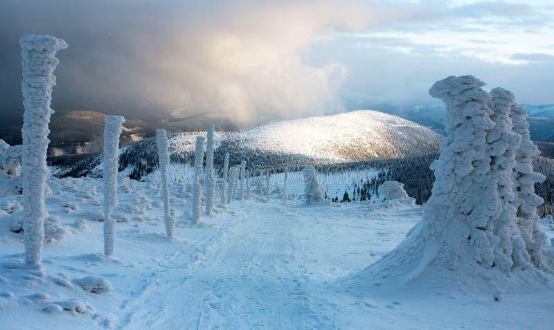 Wintry skida slingan på det Jeseniky berg - den tjeckiska republiken royaltyfri bild