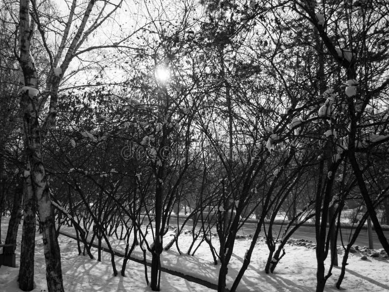 Wintry Trees em Almaty, Cazaquistão fotos de stock