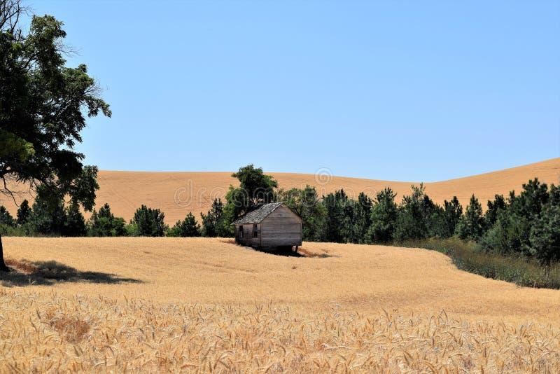 Winzige alte Hütte mit grünen Bäumen in Weihfeldern im Bundesstaat Washington isoliert lizenzfreies stockfoto